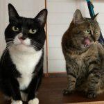 妹猫を迎えて寂しくなくなったお留守番、ひとりっ子だった猫の生活が一変、3匹の仲間で楽しく暮らす