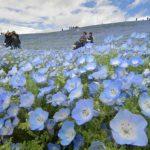 茨城県ネット調査 郷土愛「ある」7割超 海浜公園、メロンが自慢