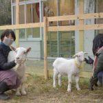 キャンパスでヤギ飼育し芸術表現 取手 学生創作や住民交流