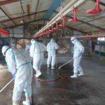 鹿児島・さつま町の鳥インフル、高病原性と確定 養鶏場の殺処分など防疫措置完了