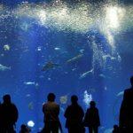 茨城「アクアワールド茨城県大洗水族館」リニューアルの目玉は1万体のクラゲが幻想的空間を魅せる大水槽