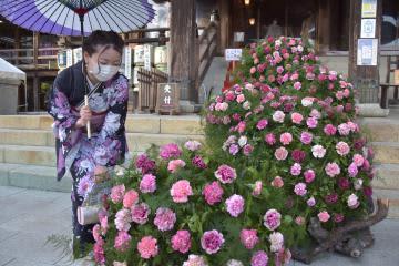 「百人きもの」花で境内彩り コロナ収束願う 筑波山、3月1日まで