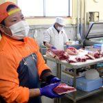 「厄介者」イノシシ有効活用、ジビエ料理に 茨城県議長ら提案、食用へ体制整備模索