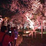 梅彩る幻想的な光 弘道館と水戸城跡