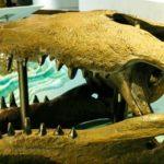 恐竜を捕食?白亜紀の巨大ワニ 「デイノスクス」  「大地のハンター展」 みどころその3(国立科学博物館)