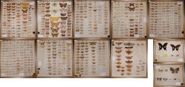 岡山県産最古の昆虫標本見つかる 昭和天皇献上、倉敷の博物館調査