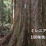 女性と男性の視点で切り開く森林の未来――樹木医 片岡日出美 (1/2)