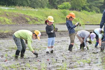泥だらけ、手植え体験 那珂 児童、米作り学ぶ