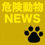 (茨城)行方市繁昌でサル出没 6月16日