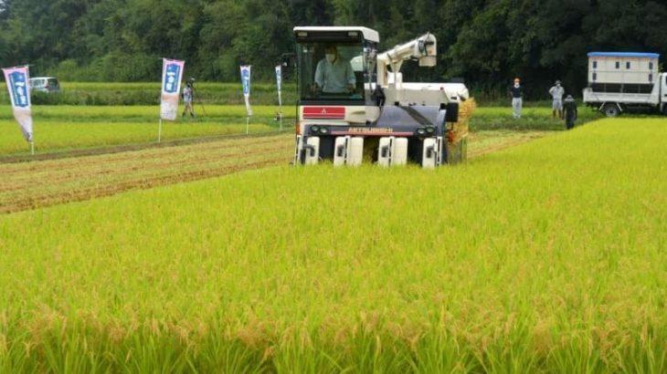 茨城県が研究開発「一番星」の稲刈り始まる 潮来の水田