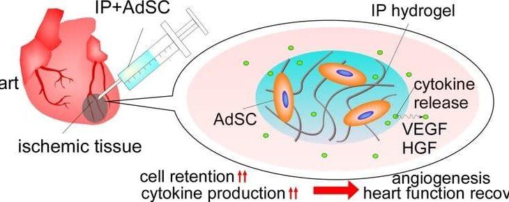 最先端材料科学研究:ヒドロゲルで生体組織再生の足場を作る