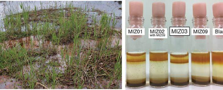 理研、pH中性環境下で鉄の酸化も還元も行える1体2役の新種微生物を発見