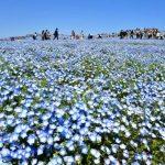 茨城県内観光客4割減 20年はコロナ響き3854万人