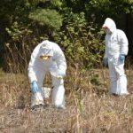 野生イノシシ豚熱 茨城で100頭超す 6月以降急増、注意喚起