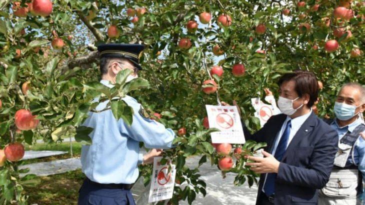 リンゴ泥棒許さぬ 茨城・大子、自警団が巡回開始