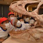 恐竜化石に興味津々 茨城・行方の北浦小 移動博物館