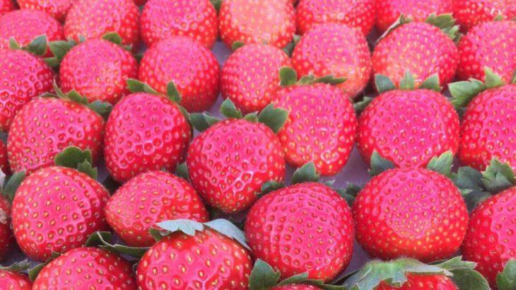 【セカンドライフ・農があるくらしを考えている方へ】ローカルと出会う体験プログラム、茨城県常陸大宮市・つながるローカル「週末農業編」(2泊3日)のご案内[PR]
